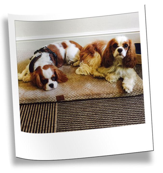Wimbledon Home Dog Boarding Services