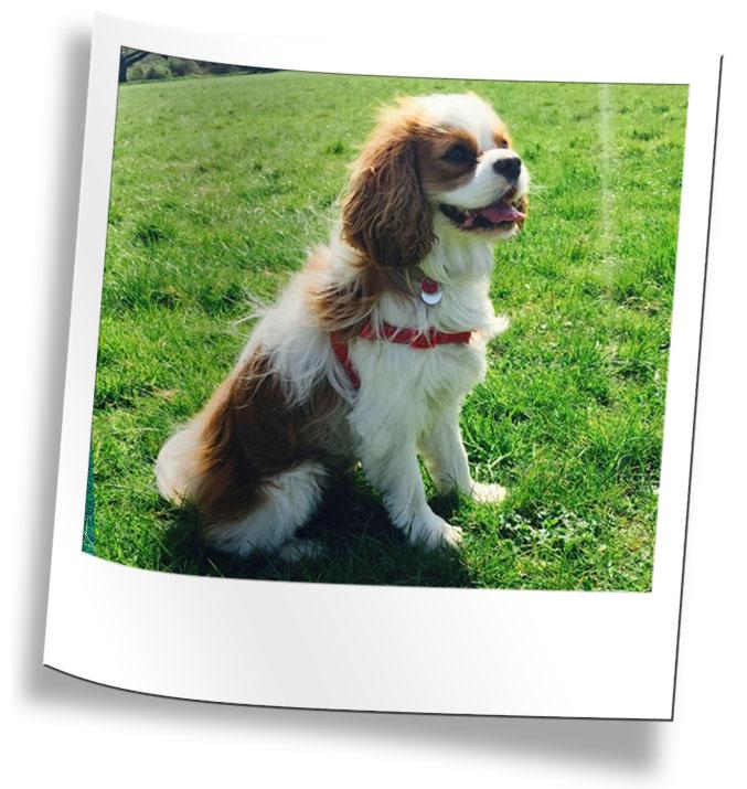 Wimbledon Dog Walking Services