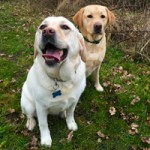 Basil & Buddy