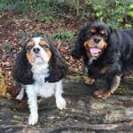 Clifford & Archie