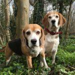 Marlowe & Watson