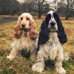 Mabel & Bertie