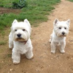 Patsy & Fergus